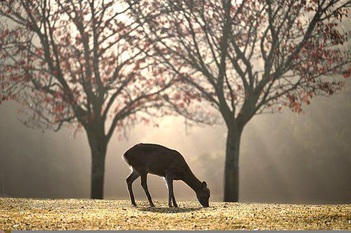 Deer, Animal, Wild Animals, Mammal, Fauna, Wilderness
