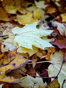 Autum, Fall, Leaves, Brown, Yellow, Red, Greenery
