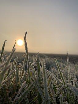 Frost, Autumn, Sun, November, Cold, Winter, Nature