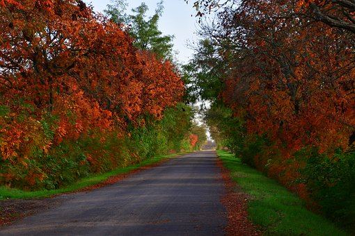 Autumn, Road, Street, Pavement, Surrounded By Trees
