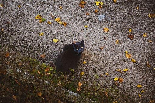 Cat, Autumn, Animal, Grey, Fall Foliage