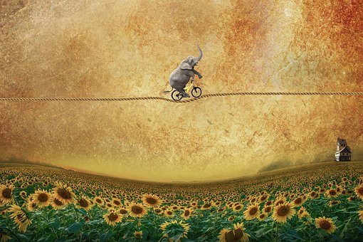 Elephant, Bicycle, Rope, Balance, Sunflowers, Flowers