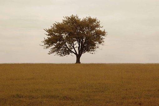 Tree, Grass, Horizon, Solitude, Solitary, Grassland