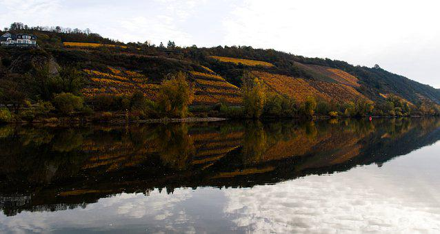 River, Bank, Water, Vineyard, Landscape, Nature