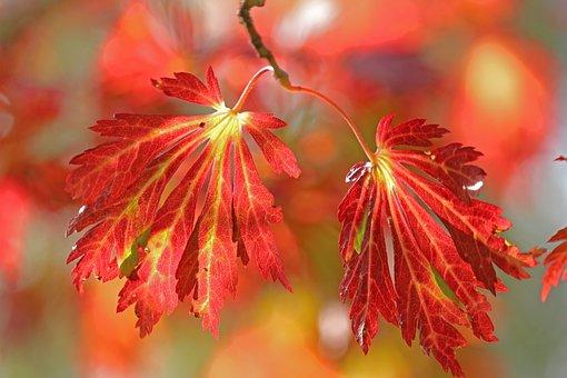 Autumn, Leaves, Pair, Autumn Leaves, Autumn Colors