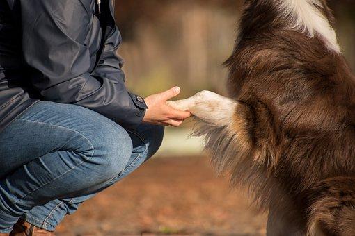 Dog, Pet, Owner, Human, Friendship, Australian Shepherd