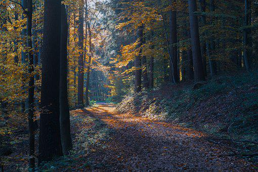 Forest, Autumn Forest, Fall Foliage, Trees, Forest Path