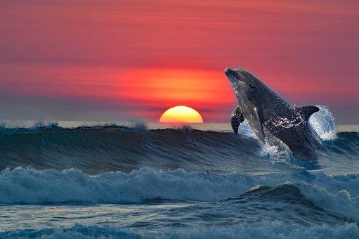 Dolphin, Sea, Mammal, Animal, Water, Fish, Ocean
