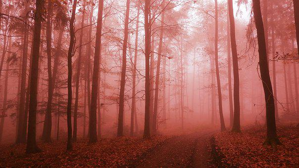 Trail, Forest, Fog, Foggy, Mist, Path, Forest Path