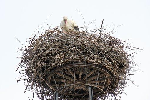 Bird, Stork, Nest, Bill, Plumage, Avian, Rattle Stork
