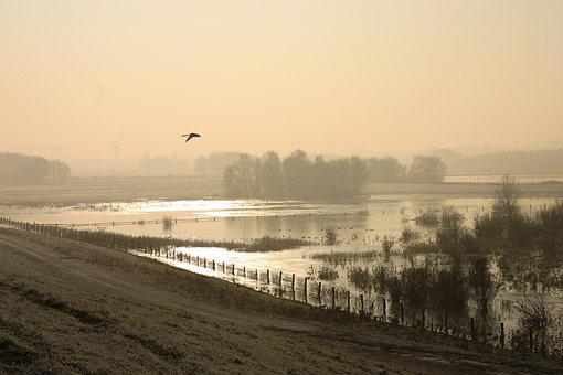 River, Fog, Wild Goose, Rhine, Winter, Twilight