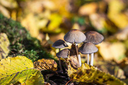 Mushrooms, Forest Ground, Small Mushrooms