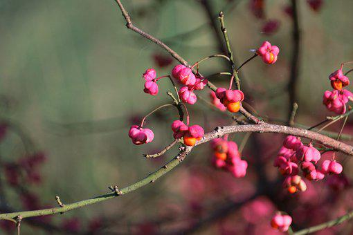 Blossom, Bloom, Branch, Spring, Plant, Nature, Bud