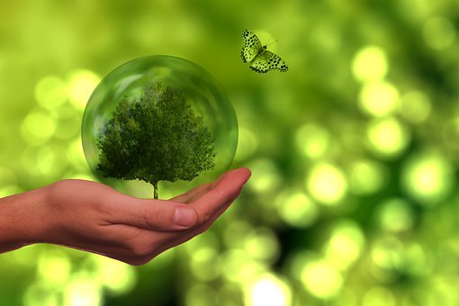 Tree, Butterfly, Globe, Energy, Sustainability