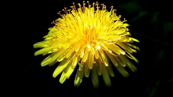 Flower, Grasshopper, Yellow, Spring, Nature, Plant