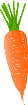 Carrot, Vegetable, Food, Healthy, Nutrition, Organic