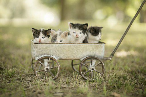 Kittens, Wagon, Pets, Cats, Kitty, Young, Baby Cats