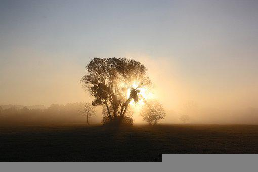 Trees, Fog, Sunrise, Dawn, Morning Fog, Haze, Mist