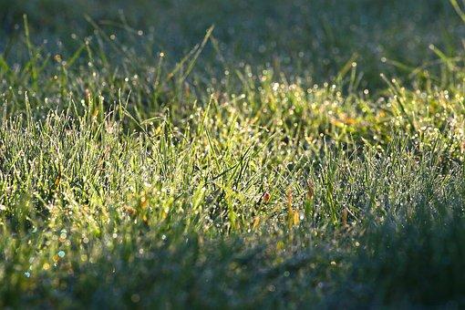 Grass, Morning Dew, Meadow, Field, Grassland, Dewdrops