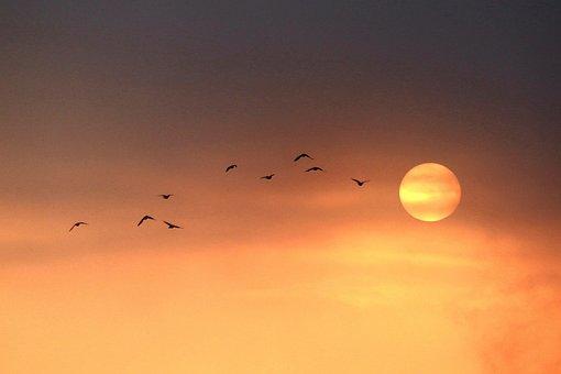 Sunrise, Sky, Birds, Flying, Sun, Dawn, Morning