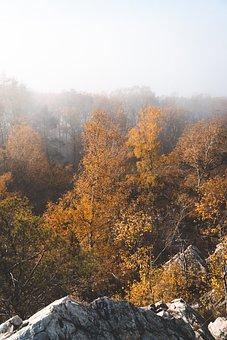 Forest, Trees, Rocks, Foliage, Path, Fog, Light