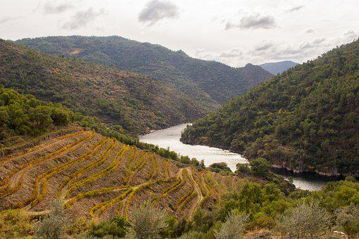 River, Mountains, Vineyards, Viticulture, Winegrowing
