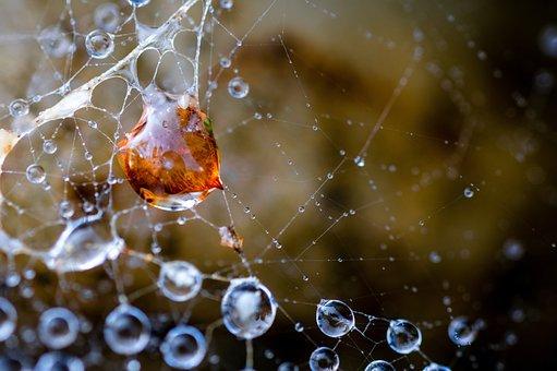 Web, Cobweb, Droplets, Dewdrops, Dew, Water Drops