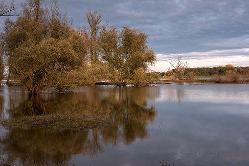 River, River Landscape, Flooding, Flood, Graze, Trees