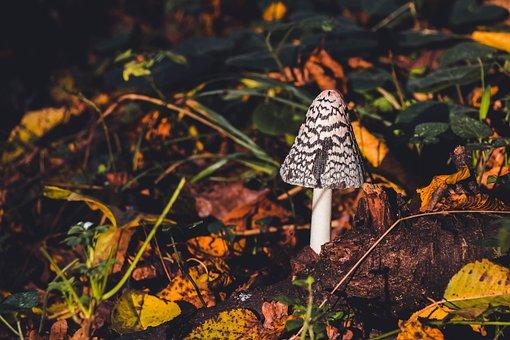 Toadstool, Mushroom, Toxic Mushroom, Toxic, Poison