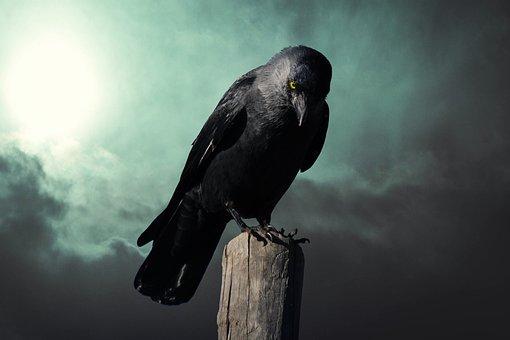 Fantasy, Crow, Mysterious, Rook, Bird, Black Bird