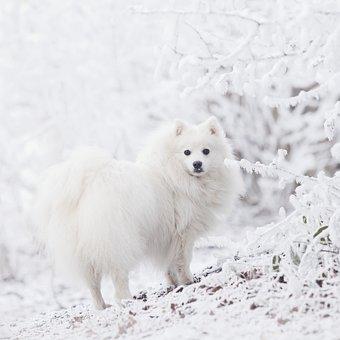 Dog, Pet, Cute, Fur, Tree, Snow, Winter, Purebred