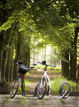Scooters, Trees, Path, Street, Vehicle, Transportation