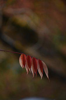 Autumn, Leaves, Foliage, Autumn Leaves, Autumn Foliage