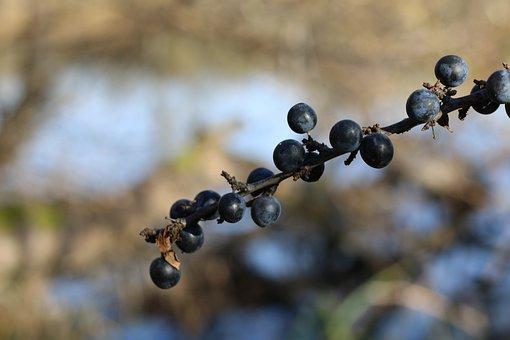 Berries, Branch, Bush, Autumn, Nature, Fruit Juicy