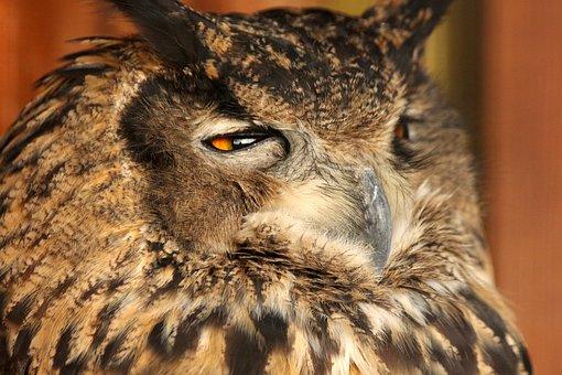 Eagle Owl, Bird, Animal, Owl, Eurasian Eagle Owl
