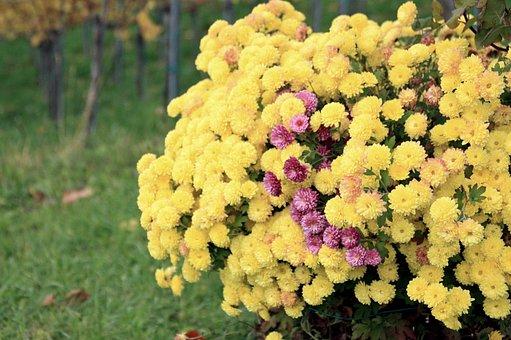 Flowers, Petals, Flower Bed, Bush, Flora, Floral
