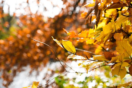 Leaves, Tree, Forest, Woods, Autumn, Fall, Nature