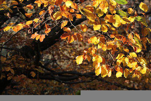 Tree, Branches, Leaves, Autumn, Forest, Nature