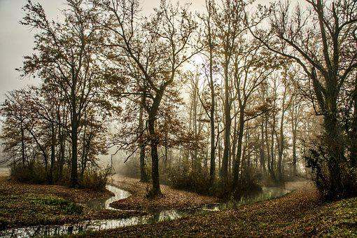 Trees, Forest, Fog, Pathway, Trails, Autumn, Nature