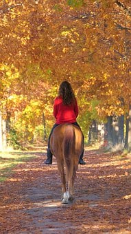Horse, Girl, Ride, Path, Fall, Horse Back Riding