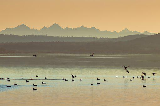 Lake, Mountains, Birds, Waterfowls, Sunset, Haze, Dusk