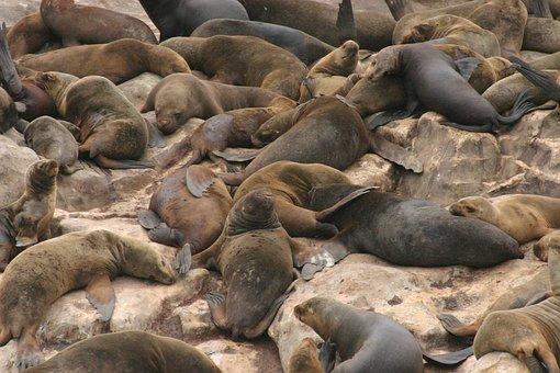 Wolves, Sea, Seals, Islands, Palomino Island, Rest