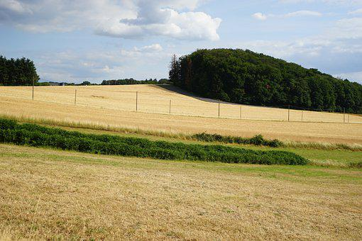 Fields, Dry, Trees, Grass, Fence, Demarcation, Meadow