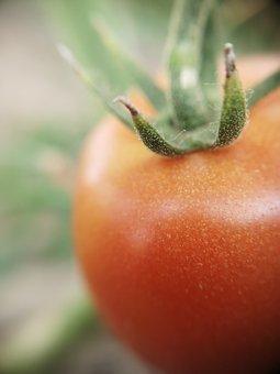 Tomato, Red, Organic, Red Tomato, Ripe, Ripe Tomato