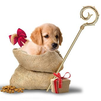 Puppy, Gifts, Gift Bag, Saint Nicholas, Party, December