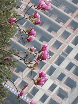 Flowers, Magnolia, Spring, Nature, Floral, Tree, Urban