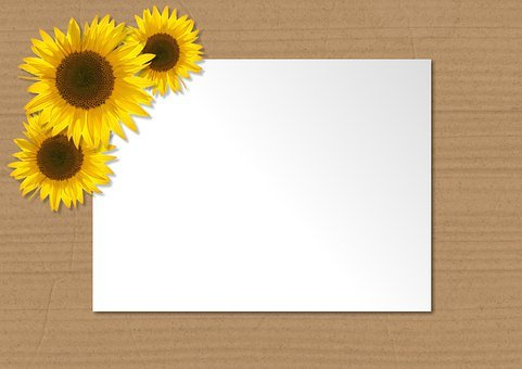 Paper, Sheet, Copy Space, Sunflowers, Border, Frame