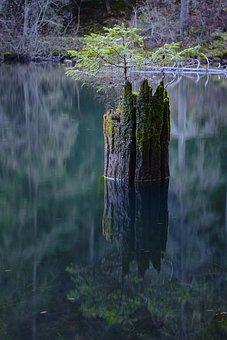 Lake, Stump, Tree Stump, Calm Waters, Water, Reflection