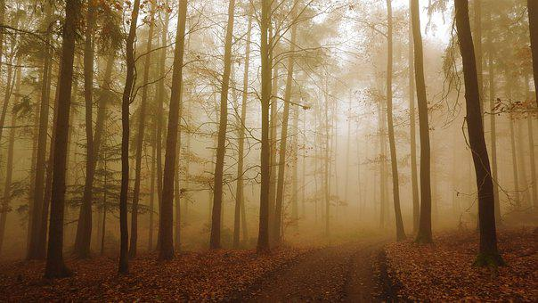 Forest, Trail, Fog, Trees, Leaves, Mist, Foggy, Path