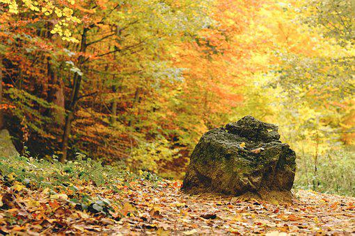Rock, Forest, Autumn, Leaves, Foliage, Autumn Leaves